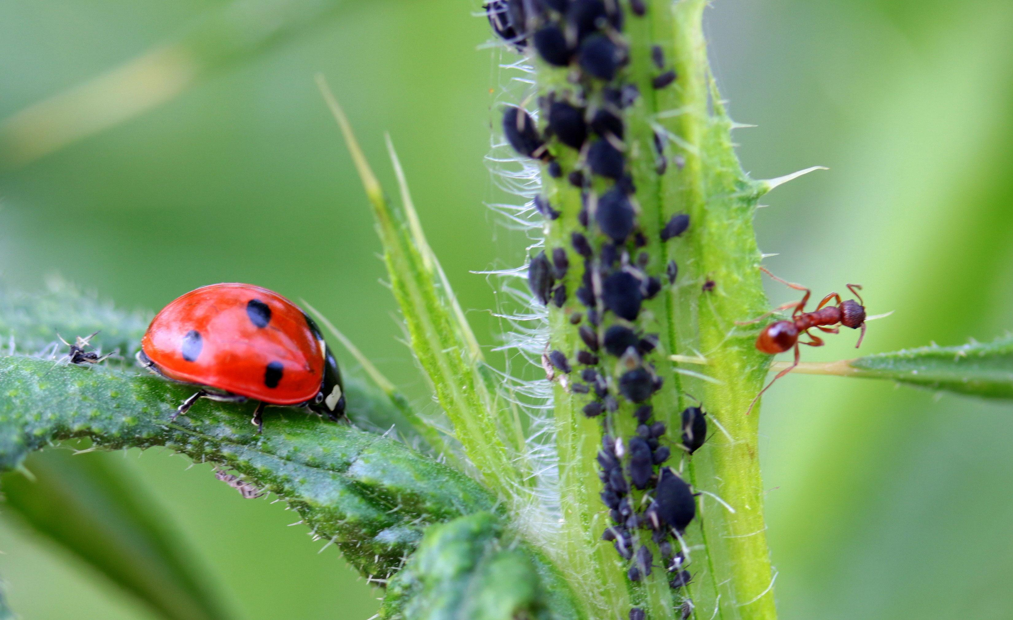 ladybug-1486479